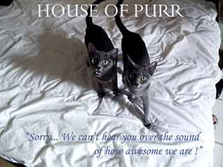 House of Purr